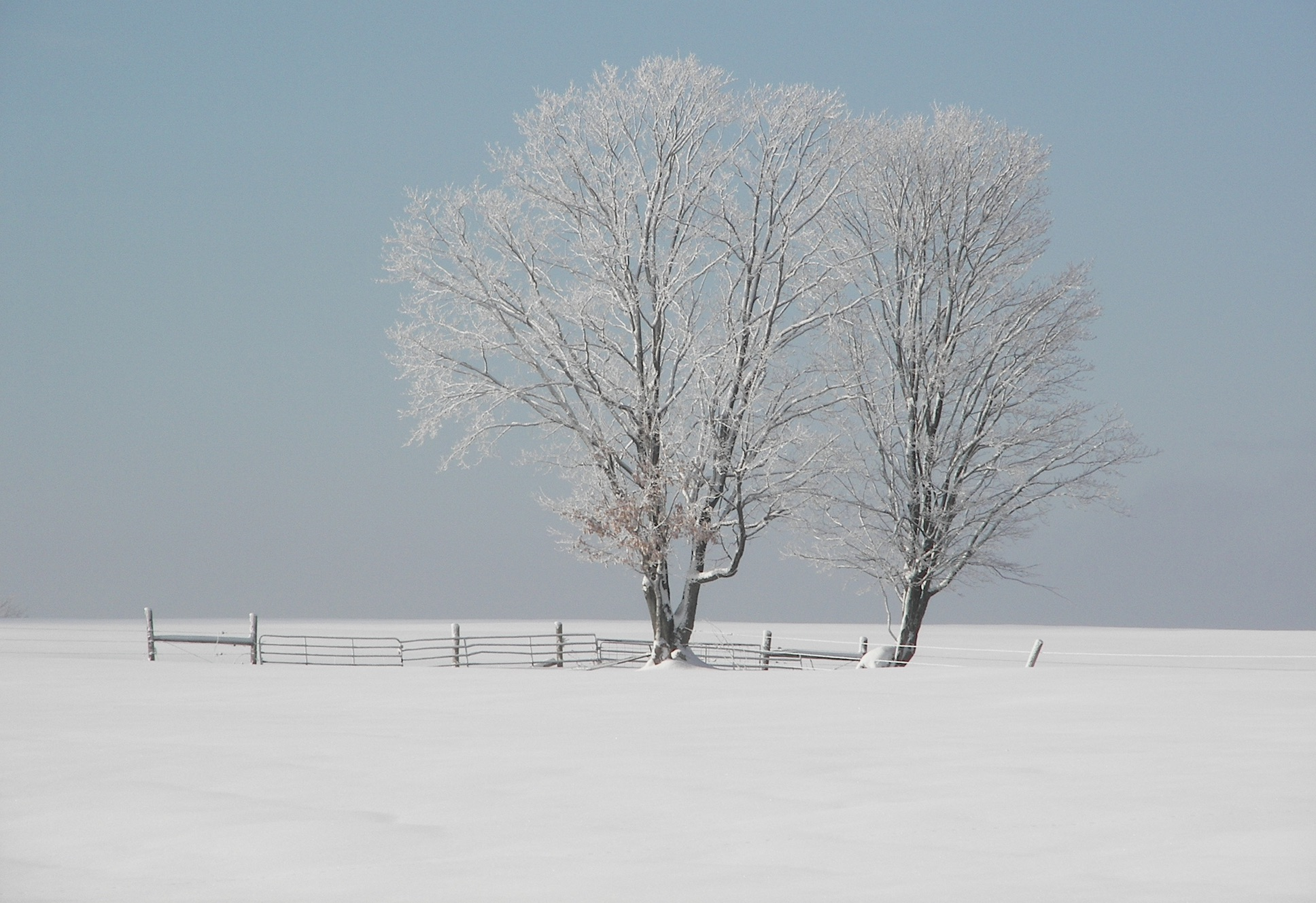 Photo of tree (winter) by Rene