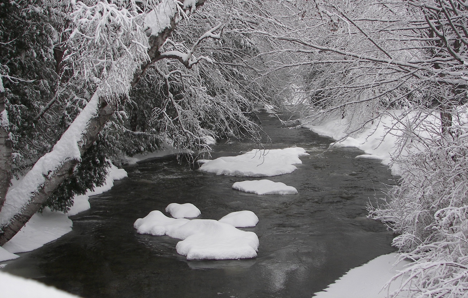 Photo of trees and water (winter) by Rene